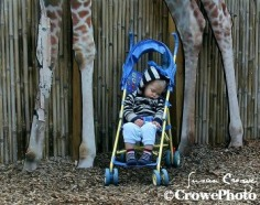 nap time at zoo