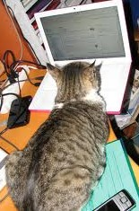 Photo Credit: Stephanie Booth / Flickr (CC BYB-NC-SA 2.0) Cat blogging pictures are adorable and, along with GIFS, are a recurring theme throughout this post). Plus, I believe they have the same love/hate relationship with the blogging world as I do and, you know, everything else).