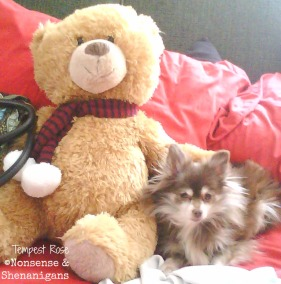 When Holden first arrived, Gizmo turned to the Teddy Bear for cuddle time.