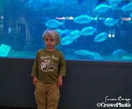 toddler at atlantic city aquarium