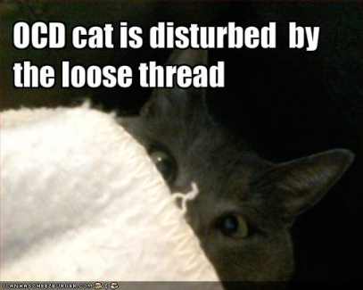 OCD cat