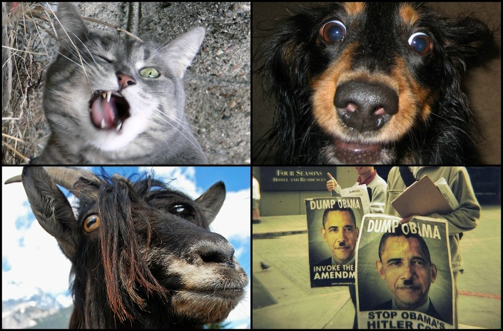 "Top Left: ""Jasmine is crazy-hilarious"" by Chuck Olsen on Flickr (CC BY-NC-SA 2.0) Top Right: ""Crazy Humans!"" by MTSOfan on Flickr (CC BY-NC-SA 2.0) Bottom Left: ""crazy Goat Mum"" by Marcel Leitner on Flickr (CC BY-NC-SA 2.0) Bottom Right: ""Crazy people in Seattle"" by Tyler Wilson on Flickr (CC BY-NC-SA 2.0)"